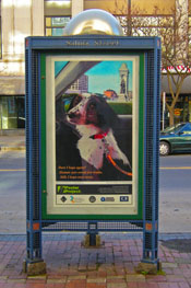 Syracuse Art Poster: Rescue Dog.